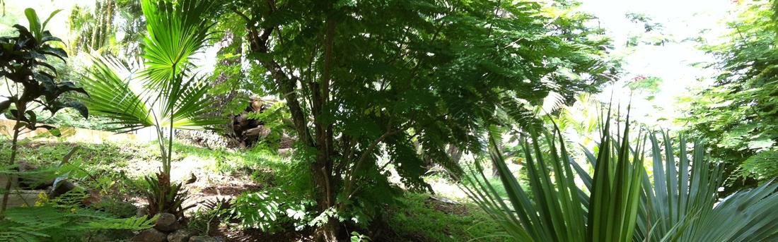 La muscade en guadeloupe chambres d 39 h tes deshaies bien for Jardin tropical guadeloupe